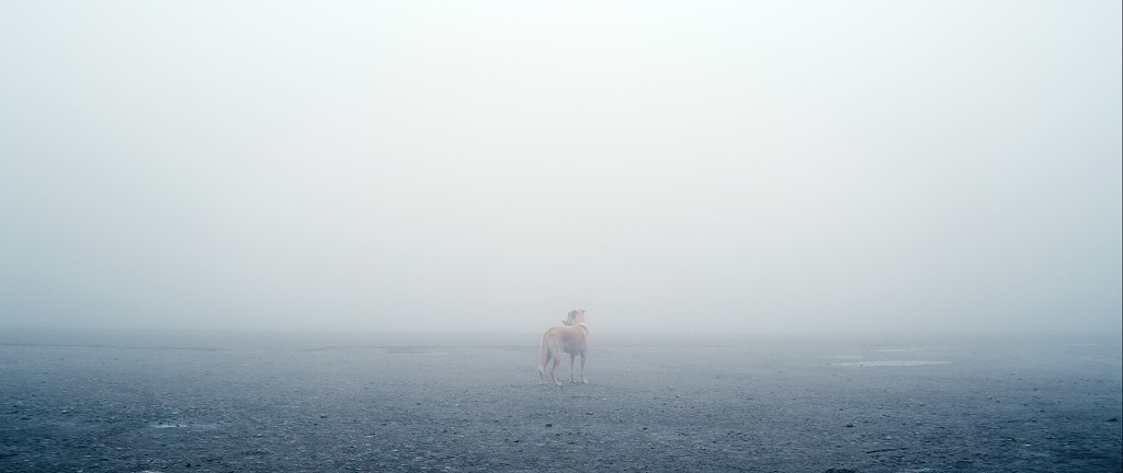 Ivan Šijak, Apperance in the fog, 2015, video, loop.